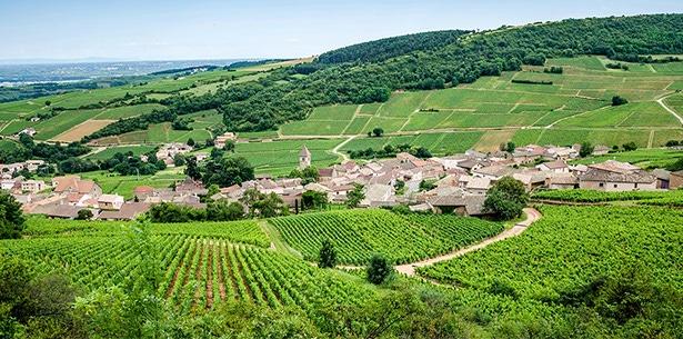 Wijnverhaal Saint-Aubin - 2