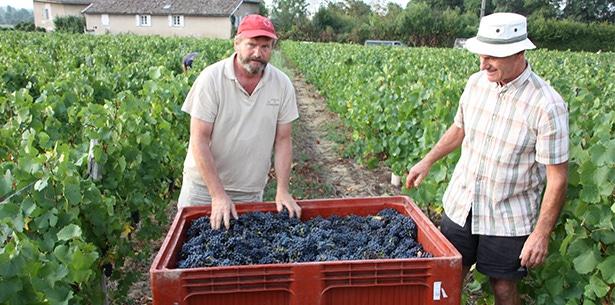 Wijnverhaal Vignerons de Bel Air Morgon - 1