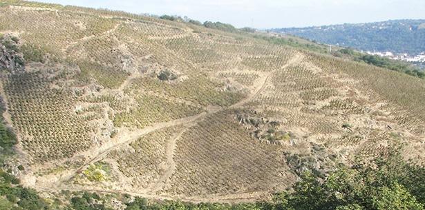 Wijnverhaal Domaine Andre Francois Cote-Rotie - 2