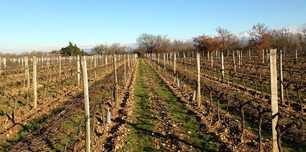 Wijnverhaal Domaine Guillaume Crozes-Hermitage - 1