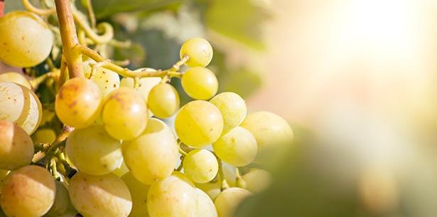 Wijnverhaal La Coupole Riche Blanc - 1