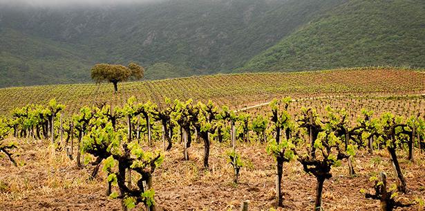Wijnverhaal Vinha