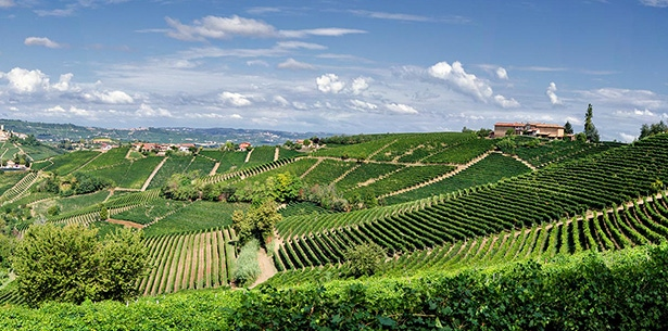 Wijnverhaal Fratelli Roero Arneis - 2