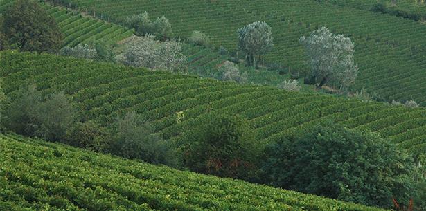 Wijnverhaal Fratelli A&R Barolo