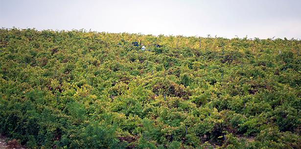 Wijnverhaal Rossetti Pinot Grigio - 2