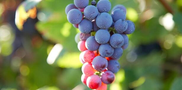 Wijnverhaal Manieri Monferrato - 1