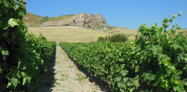 Wijnverhaal Striga Pinot Grigio - 2