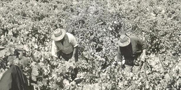 Wijnverhaal Perica Gran Reserva - 2