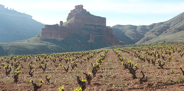Wijnverhaal La Muela Macabeo - 1