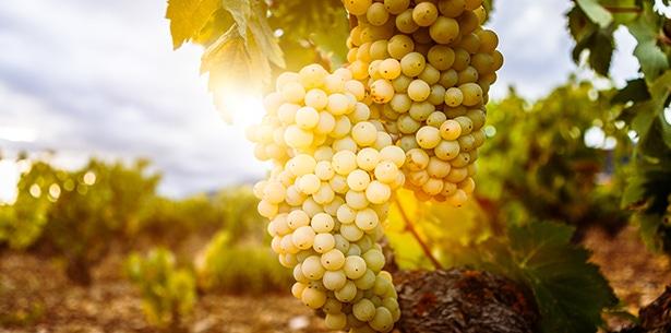Wijnverhaal Linden Estates Chardonnay - 1