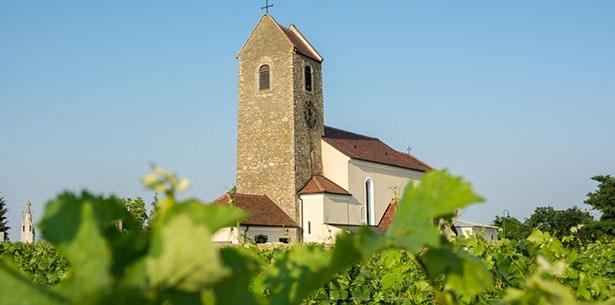 Wijnverhaal Setzer Zweigelt - 2