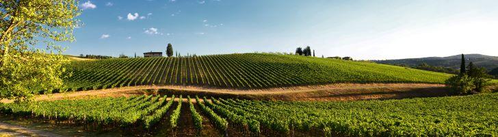 Rode wijn wijngaard