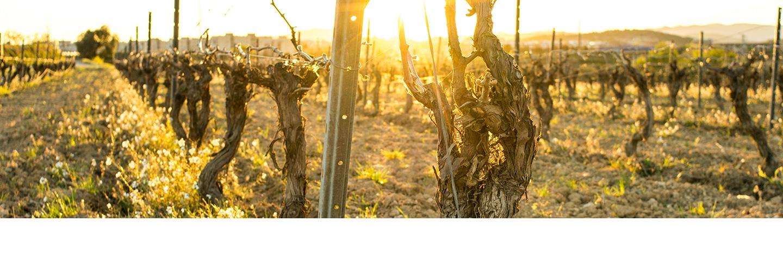 wijnregio Almansa
