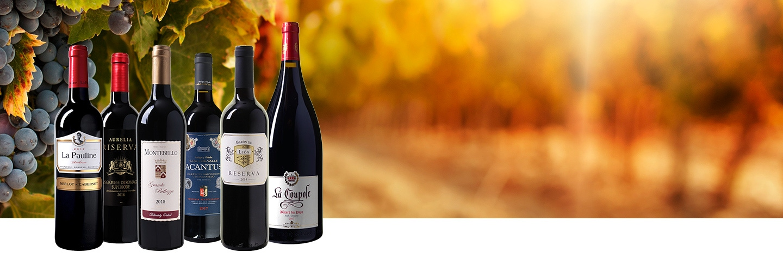 Top 5 Wijnpakket + Magnum