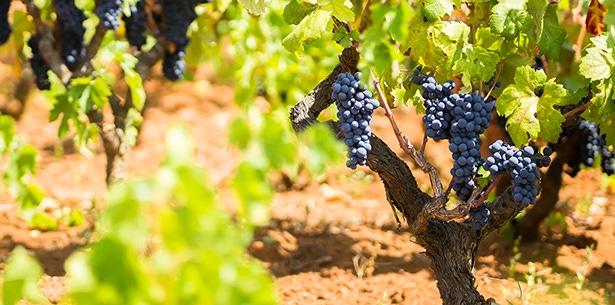 Wijn Navarra