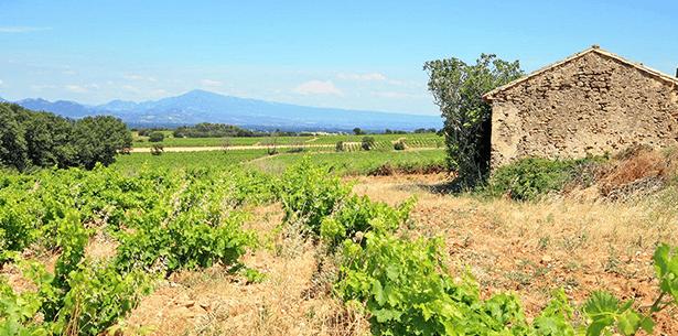 Wijnverhaal biologische wijn